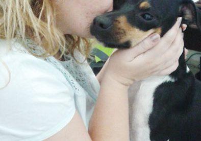 Yoshi Terrier Brasileiro