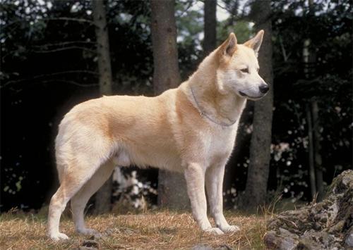 Cão de Canaã