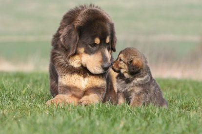 Cachorro com filhote