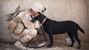 Cachorro melhor amigo do homem