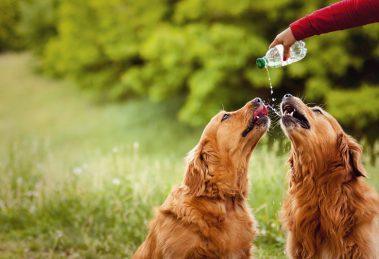 Cuidados com cães no tempo seco