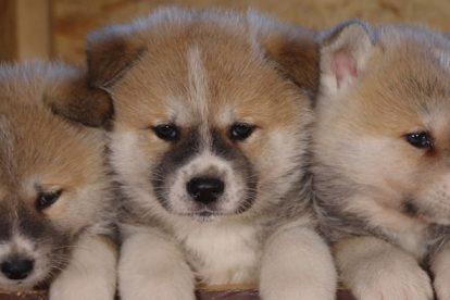 Filhotes de cachorro fofos