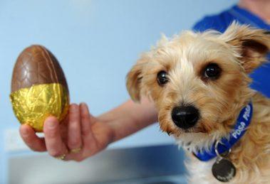 Ovos de Páscoa para cachorros
