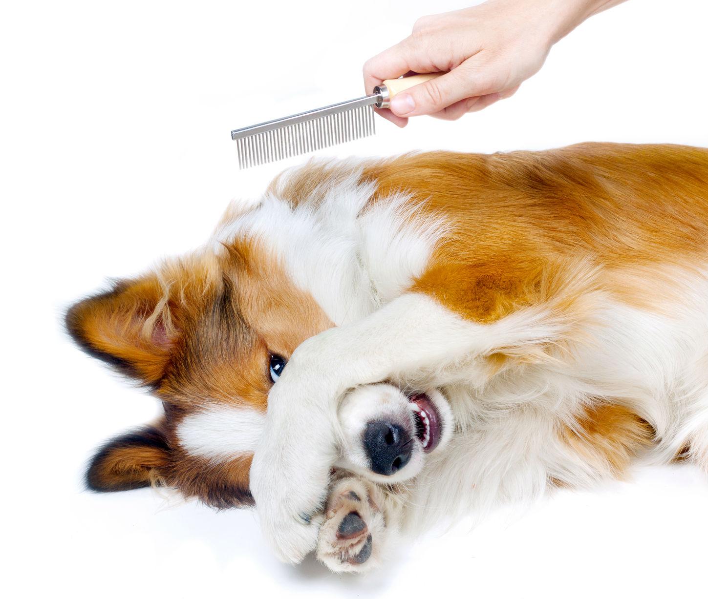 penteando-cachorro-1