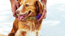 Uso de coleira em cachorros