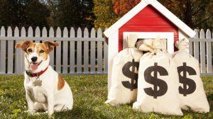 Finança canina: Quanto custa ter um cachorro?