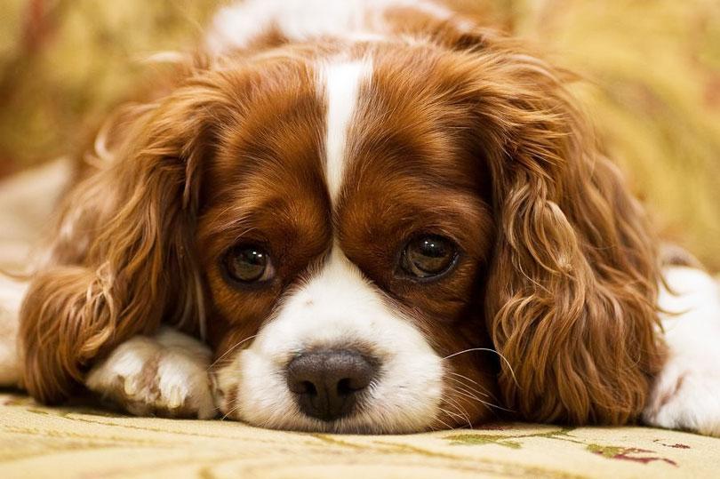 Gastos com cachorro