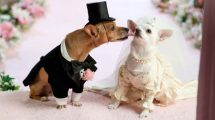 Sites de namoro para cachorros