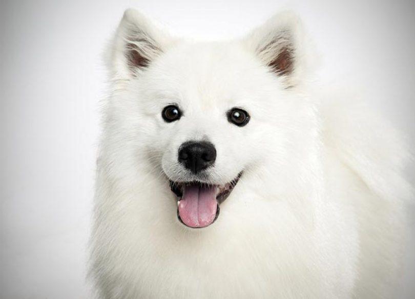 cachorro-adolescente-1