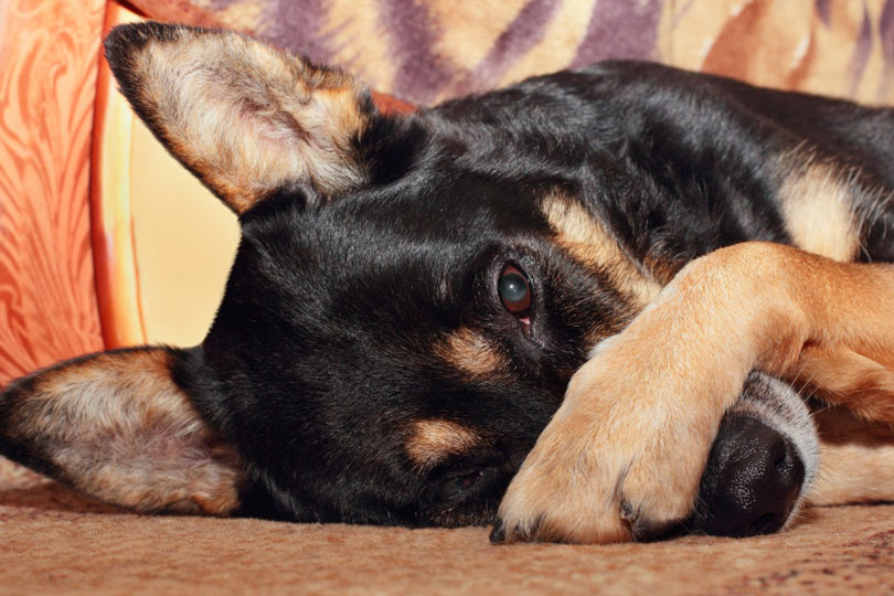 cachorro-com-mau-cheiro