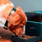cachorro-comendo