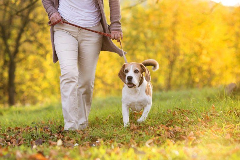 dog-walker-mulher