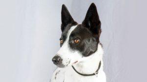 Fotos Cão de Canaã