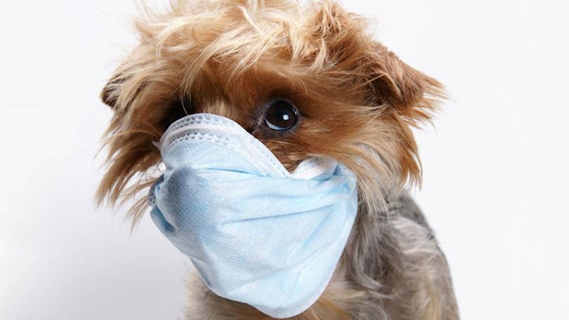 Do Dogs Get The Flu