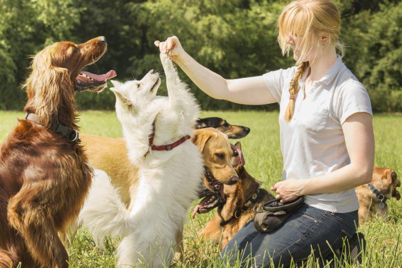 Resultado de imagem para pet sitter