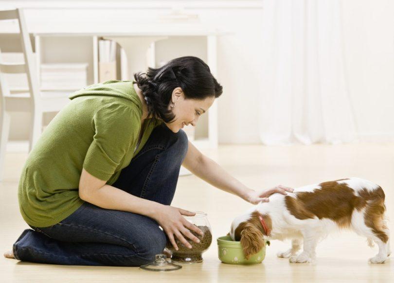 pet-sitter