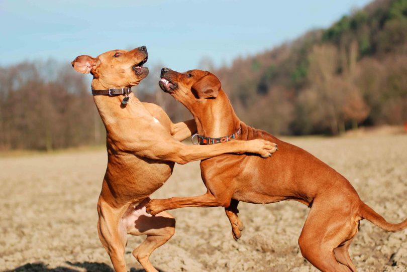 separar-briga-de-cachorro
