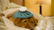 Cachorro com dor