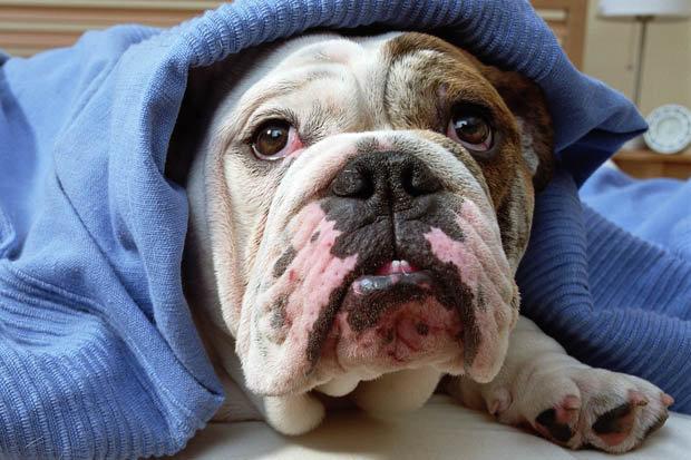 tuberculose-cachorros