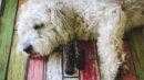 Aromaterapia para cachorros