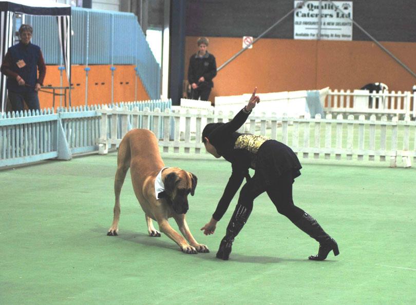 Canine freestyle dança para cachorro