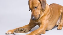 Falta de apetite em cachorros