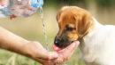 Insolação em cachorros