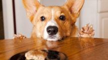 Biscoito canino