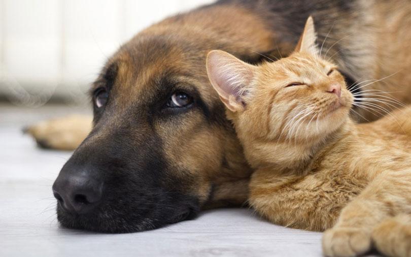 Cachorro pode comer ração de gato?