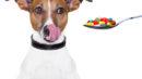 Dar remédio para cachorro