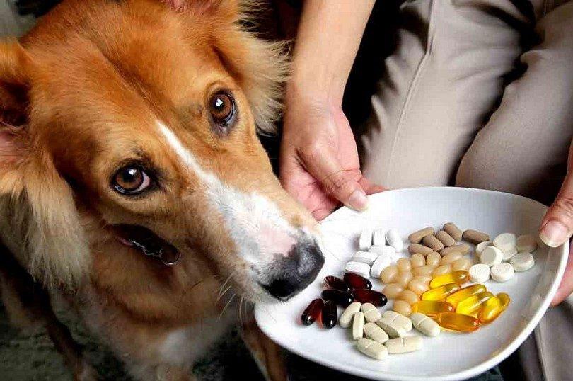 Suplementos para cachorro