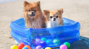Cachorro afogado