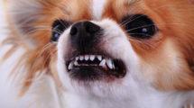 Cachorro espirrando