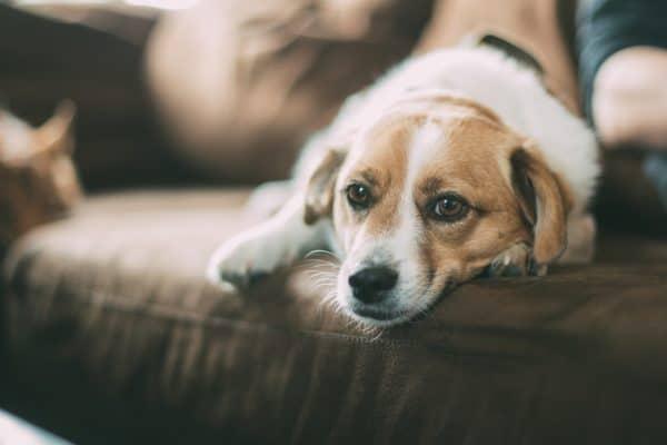 Dog Hero