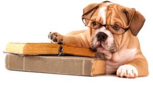 Escola para cachorros