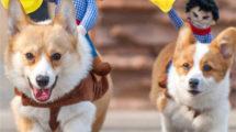 Fantasia de carnaval para cachorro