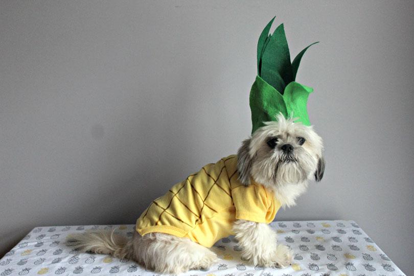Fantasia cachorro carnaval