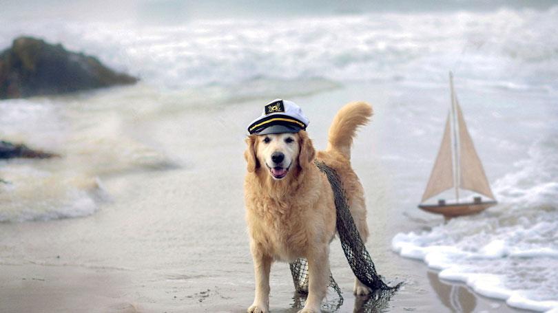Fantasia cachorro marinheiro