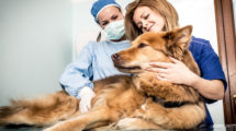 Primeiros socorros em cachorros