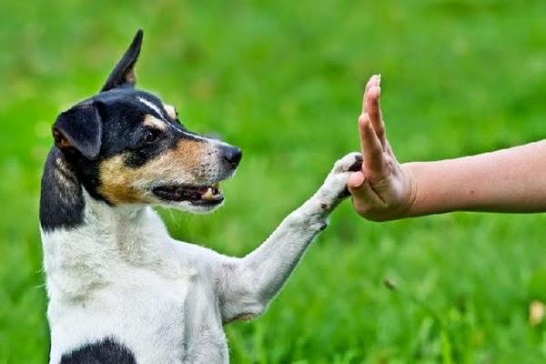 Vitamina para engordar cachorro